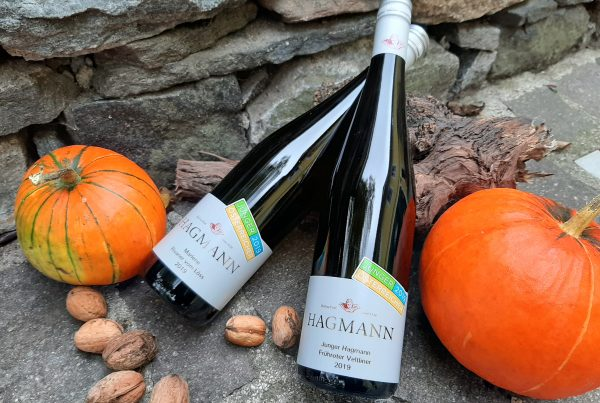 Weingut Hagmann unsere Jungweine 2019
